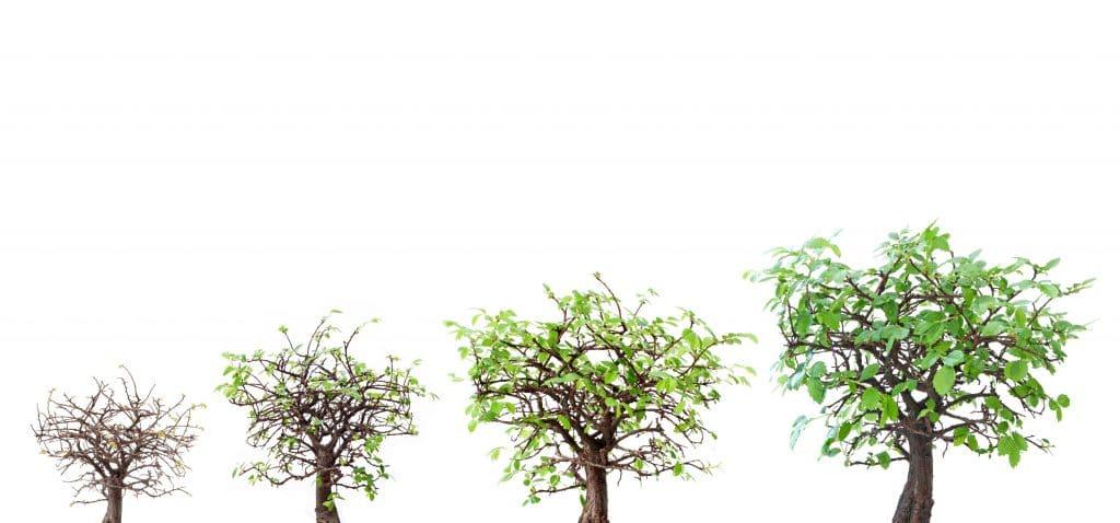 Imagem mostrando o processo de evolução de uma árvore - do outono para a primavera - mostra ela seca e depois com a sua copa cheia de folhagem.