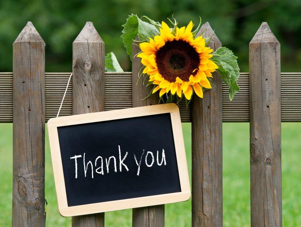 Plaquinha de lousa escrita a palavra thank you em giz branco. Ela está pendurada em uma cerca de madeira e ao lado um girassol.