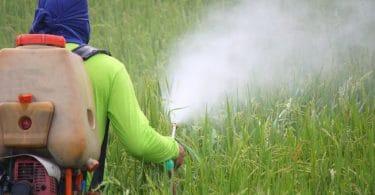 Fazendeiro de costas pulverizando pesticidas em plantação de arroz.