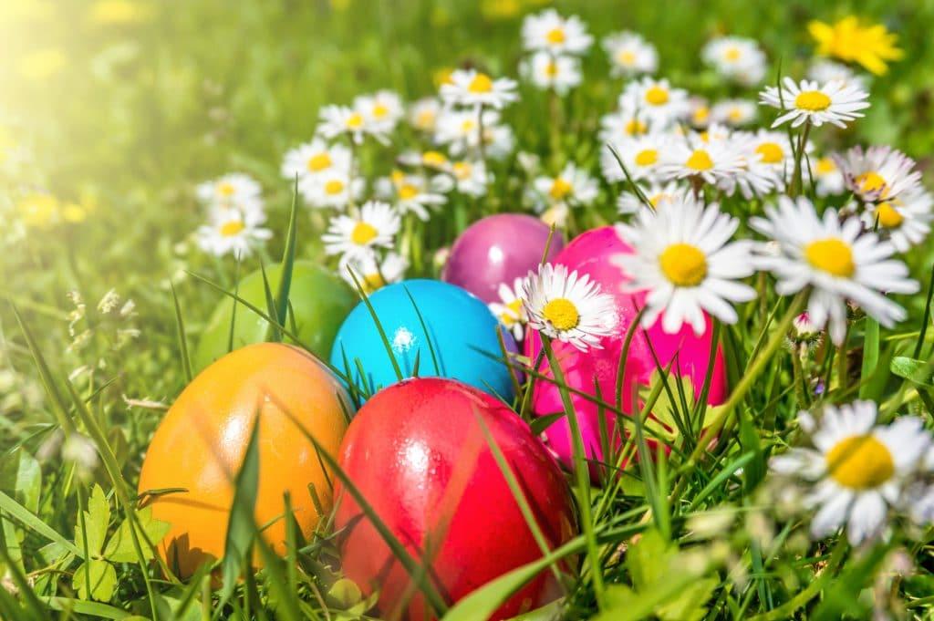 Meia dúzia de lindos ovos coloridos. Estão dispostos em um gramado cheio de margaridas brancas.
