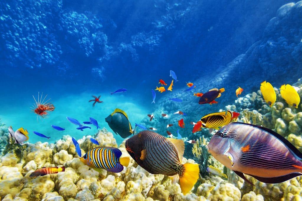 Vários tipos de peixes nadando no fundo do mar. Todos são coloridos e a água do mar está bem azul e limpa.