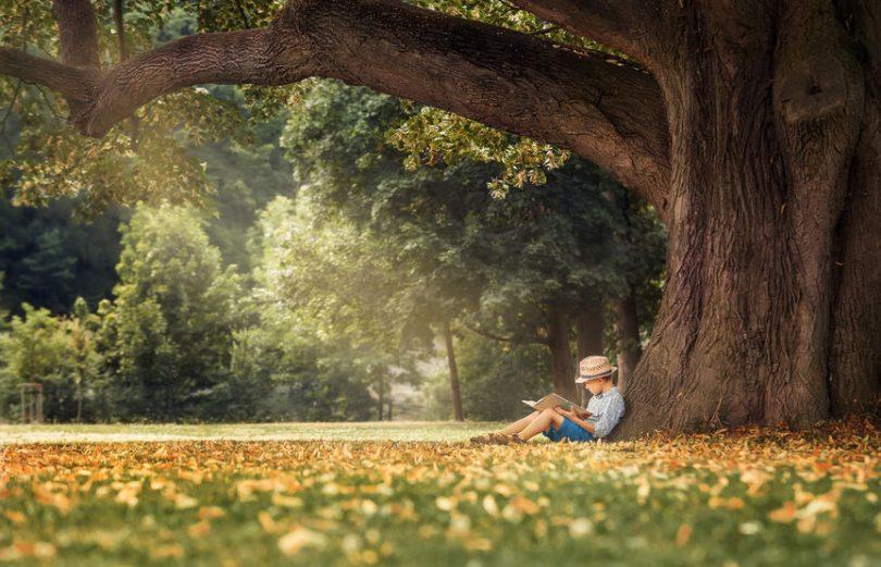 Menino lendo um livro debaixo de uma árvore.