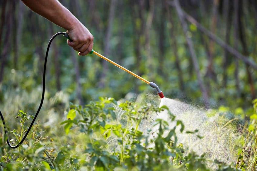 Mão com borrifador de pesticida, aplicando-o em plantas.