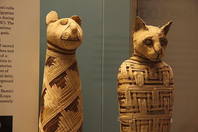 Duas múmias egípcias de gatos, atualmente no British Museum.
