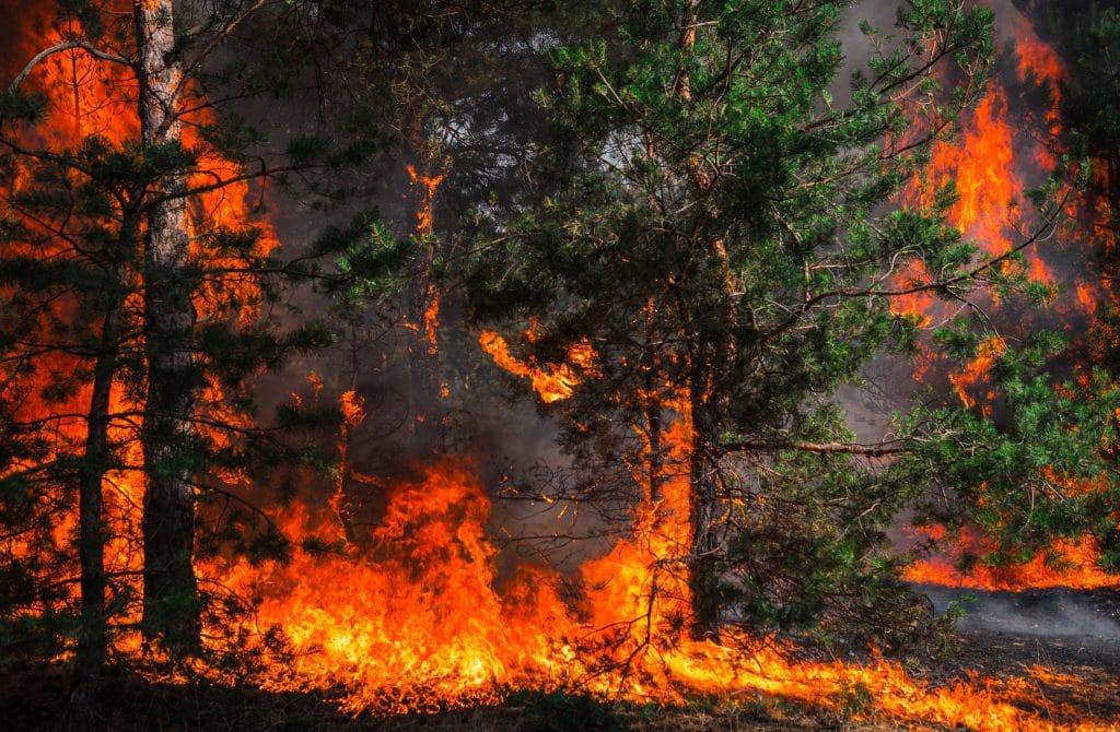 Grande floresta sendo devastada pelo fogo.