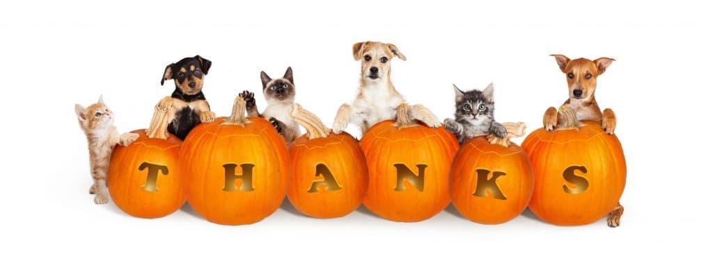 Vários cães e gatos de diversas raças e cores. Eles estão posicionados atrás de abóboras que trazem em cada uma as letras que formam a palavra THANKS.