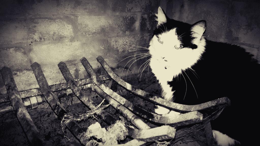 Fotografia preta e branca de um gato sentado perto de uma fogueira