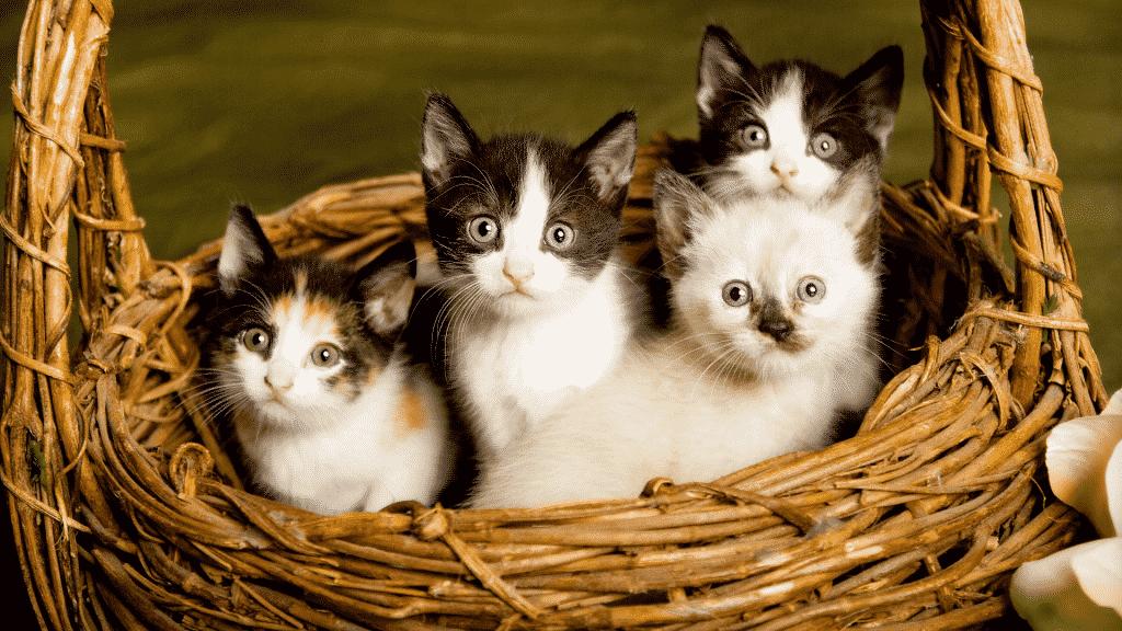 Cesta de palha com três gatinhos