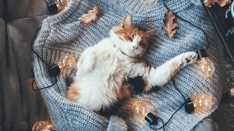 Gato dormindo de barriga para cima com luzes ao redor