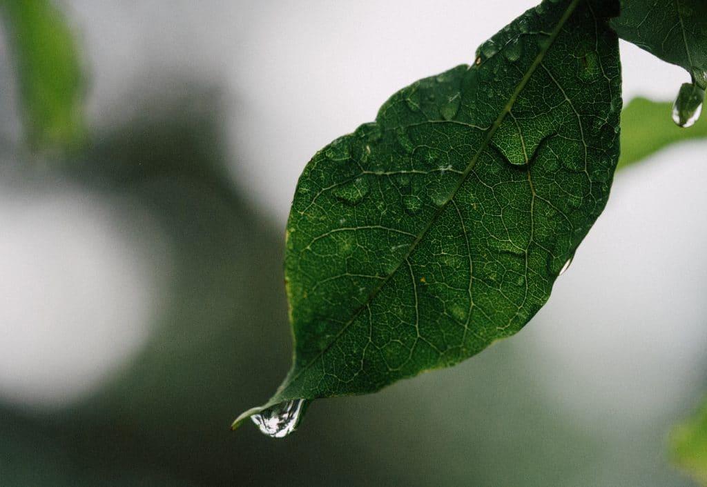 Folha com gostas de chuva escorrendo