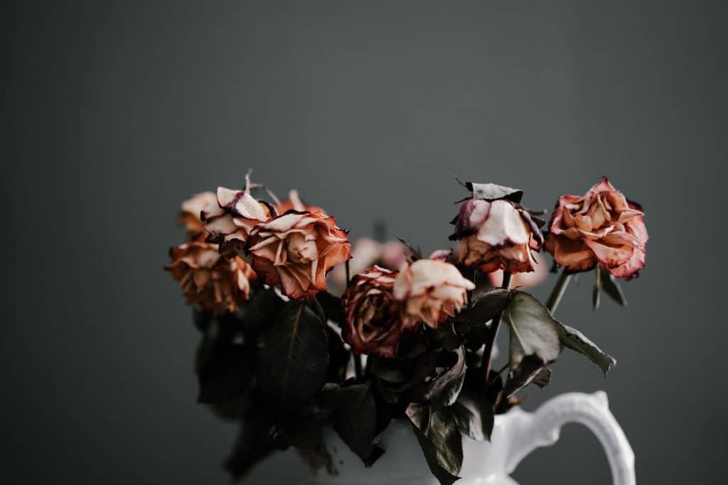 Vaso com rosas murchas.
