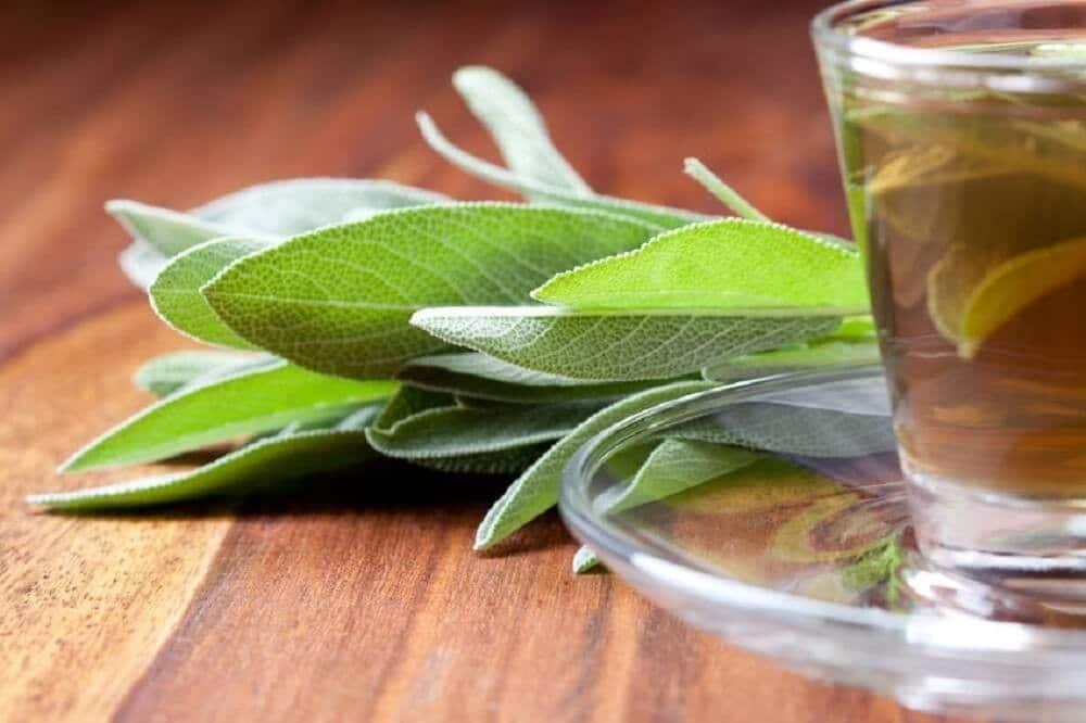 Chá de eucalipto.