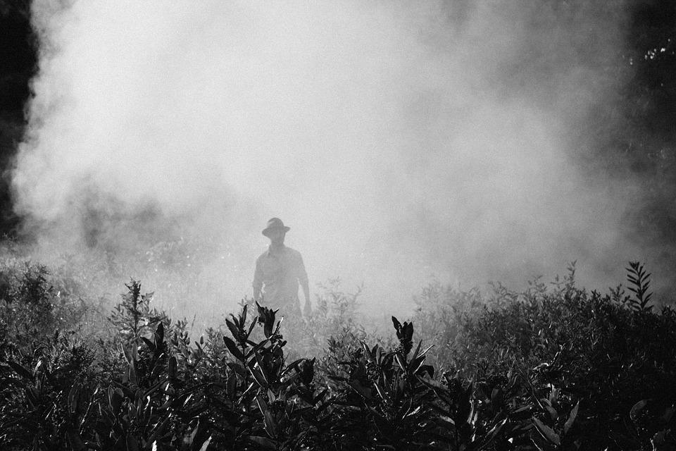 Homem usando camisa e chapéu, anda por uma plantação dentro de uma névoa grande e densa.
