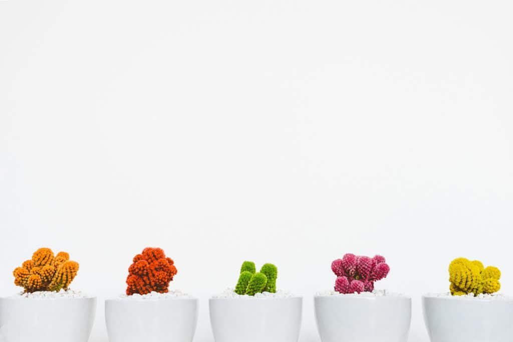 Vasos de plantas coloridas