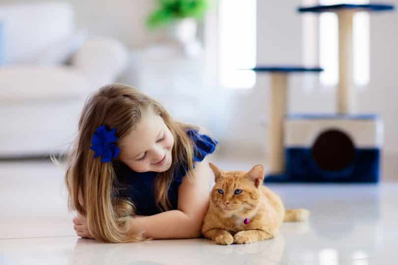 Gato amarelo ao lado de menina.