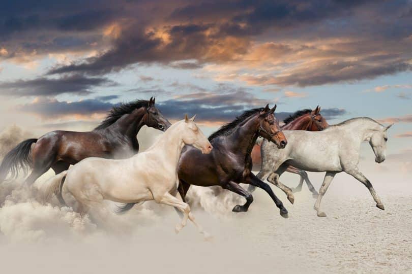 Cinco cavalos galopando no deserto ao pôr do sol