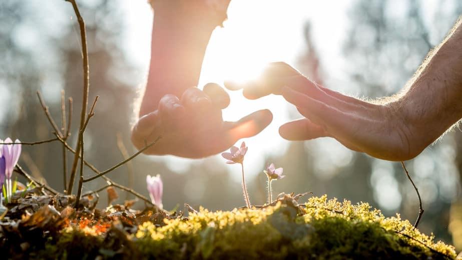 Mãos sobre algumas flores na grama.