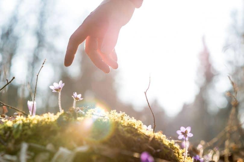 Pessoa tocando uma flor no gramado