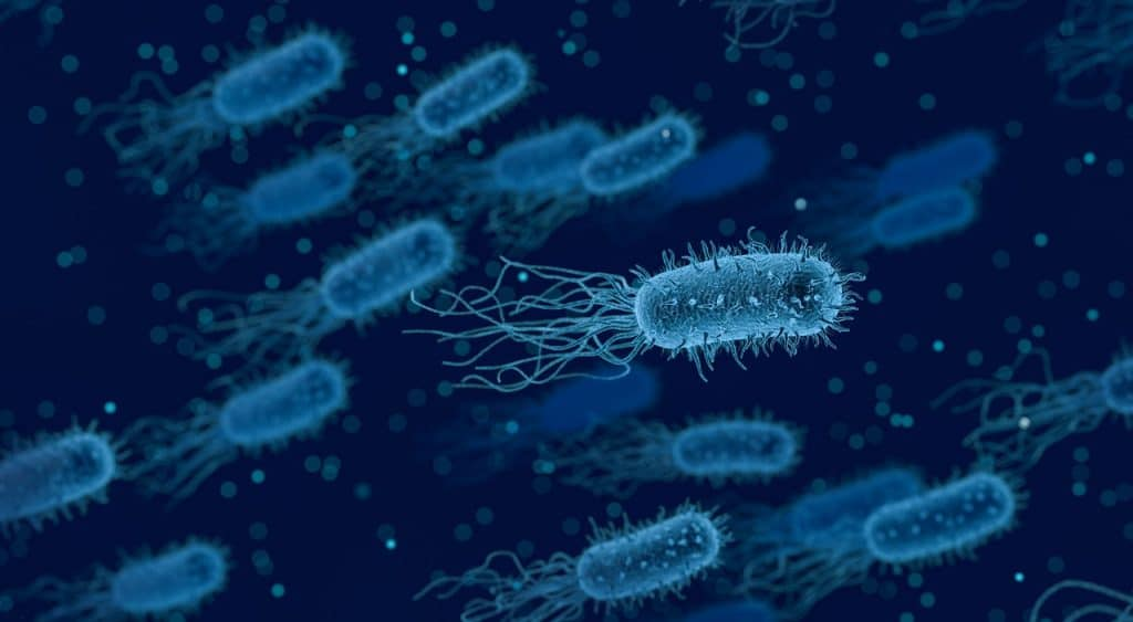 Aglomerado de bactérias visto de uma lente microscópica.