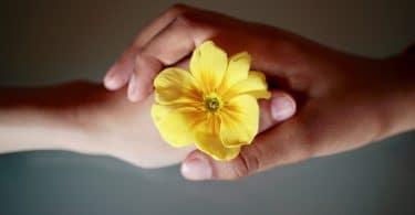 Uma mão de criança e uma mão adulta, segurando uma flor amarela juntas.
