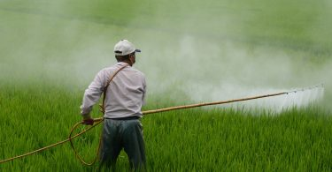 Agricultor colocando pesticidas em plantação