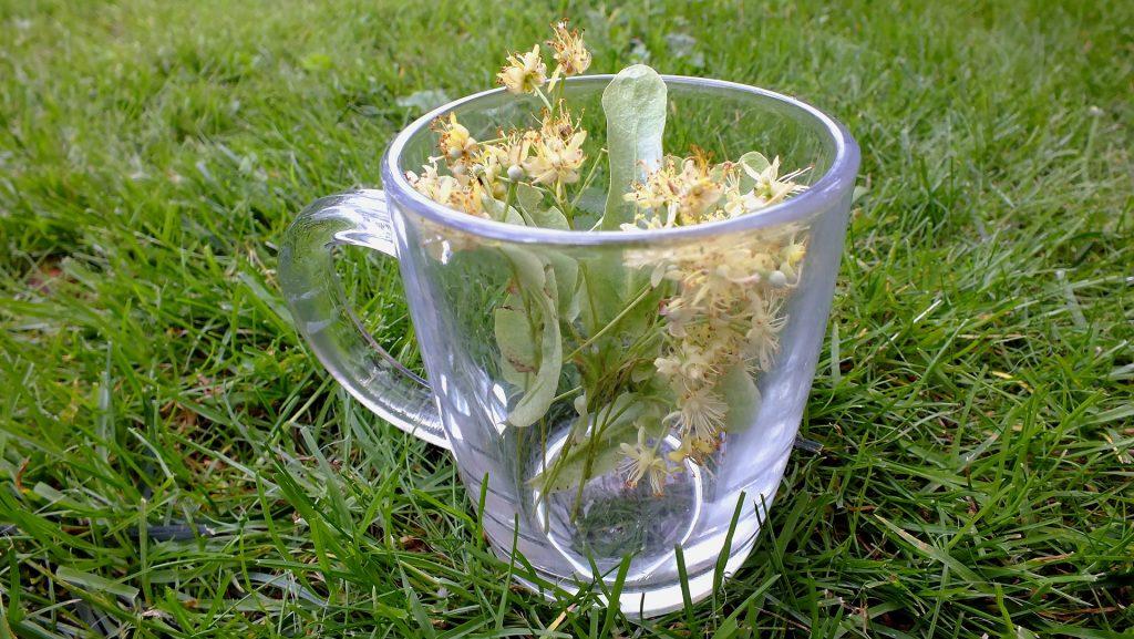 Chá de sabugueiro servido em um caneca de vidro. A caneca está sobre uma grama bem verdinha.