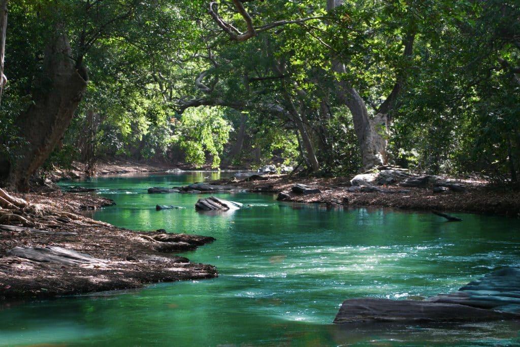 Rio entre árvores