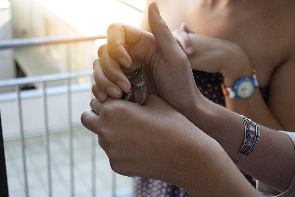 Mãos segurando um passarinho bem pequeno.