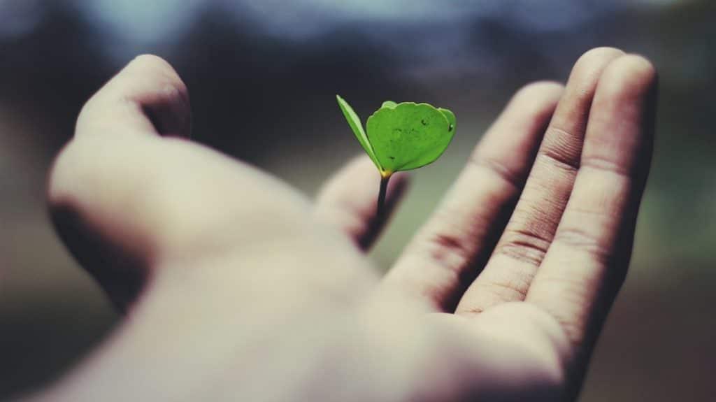 Foto proóxima de uma mão com a palma virada para cima, levemente fechada, segurando uma folha verde que está flutuando, sem tocar a mão.