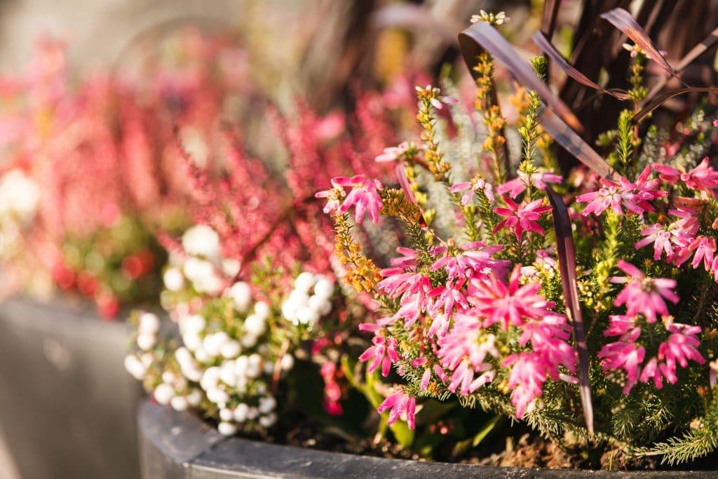 Plantas com flores nascendo.