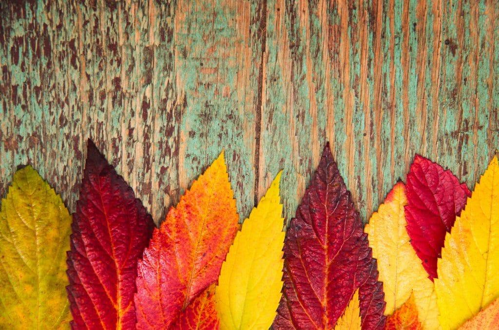Folhas de plantas variando as cores.