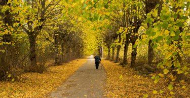 Idosa andando sozinha com o auxílio de uma bengala em um caminho cimentado no meio de uma floresta. É outono, as folhas estão alaranjadas e muitas estão no chão.