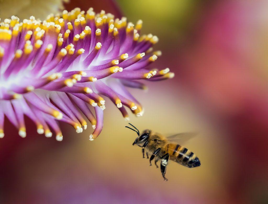 Imagem de uma abelha cheirando uma flor lilás.
