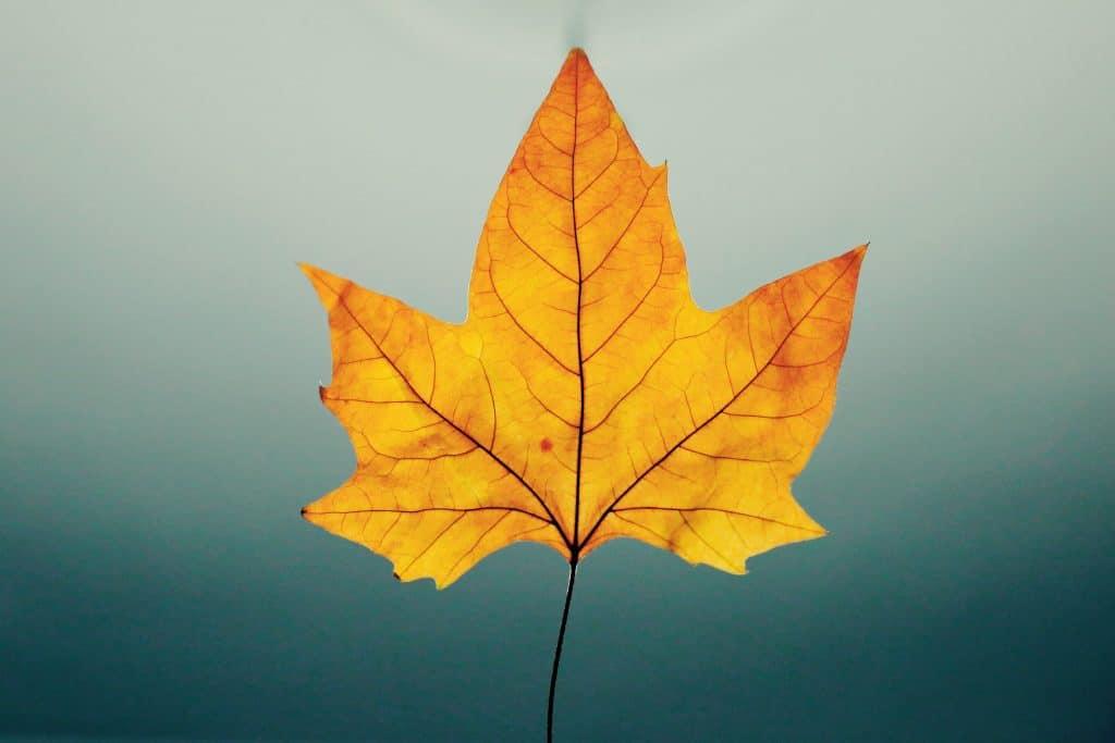 Folha de outono em foco