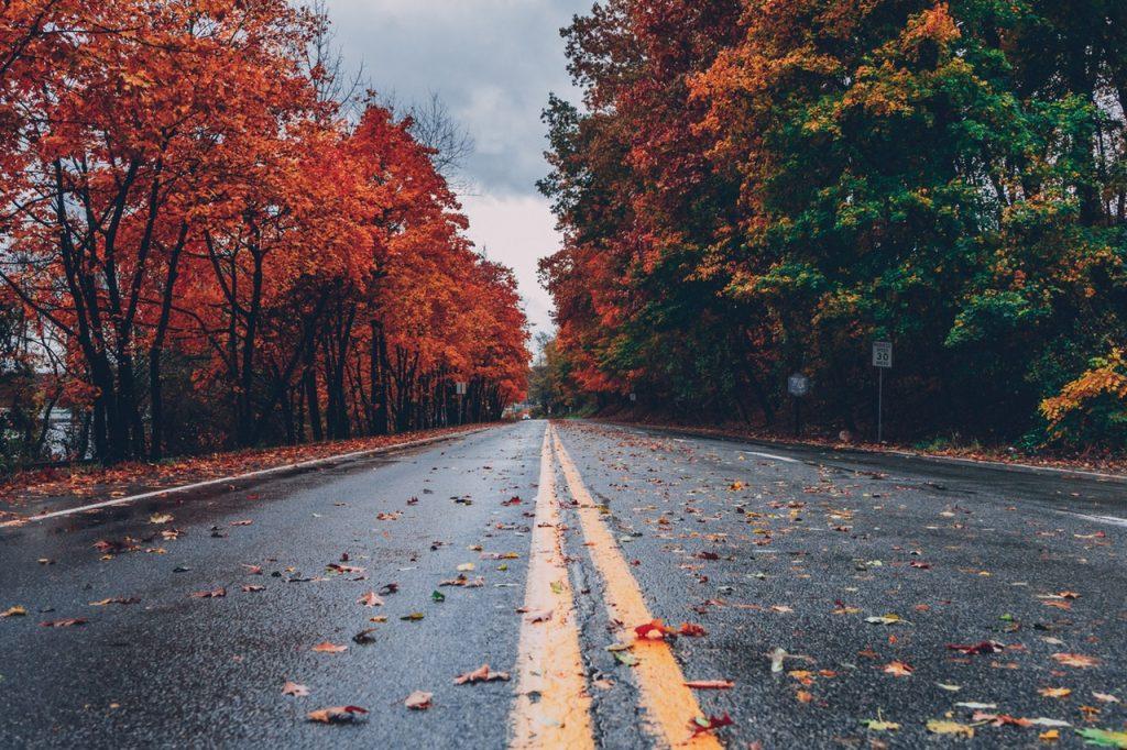 Estrada com folhas de outono no chão e árvores coloridas dos dois lados