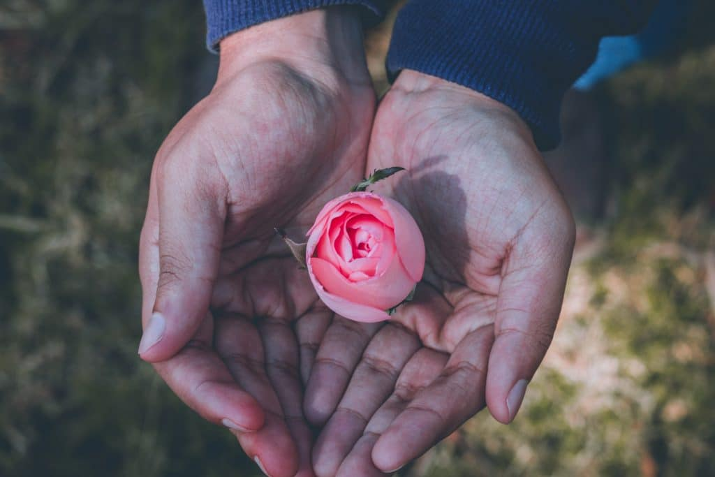 Mãos unidas com botão de rosa dentro visto de cima