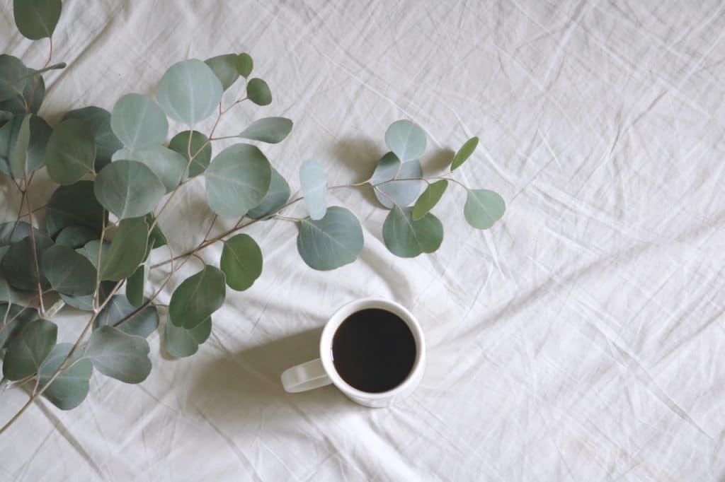 Xícara com chá de eucalipto ao lado da planta em uma cama.