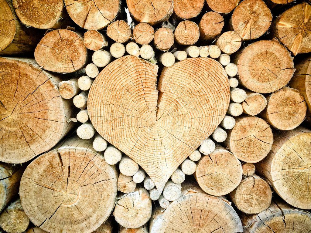 Imagem de um coração talhado em um tronco de árvore.  Ele está ao centro e em volta troncos de árvores.