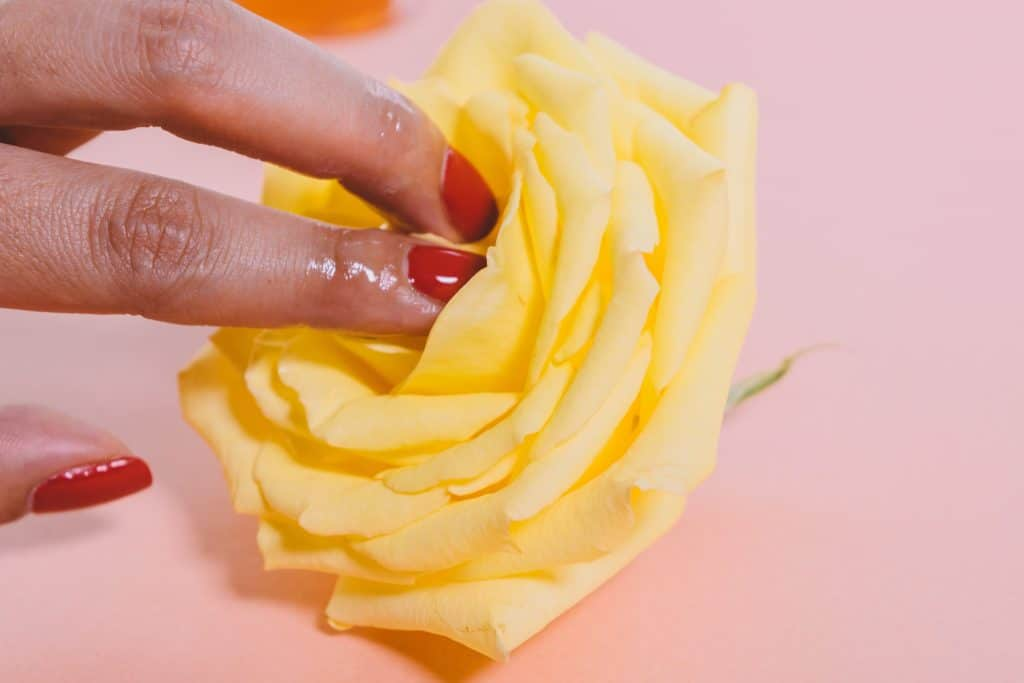 Dedos femininos adentrando em uma rosa.
