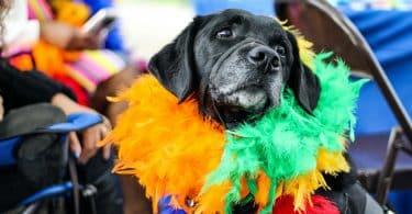 Cachorrinho com plumas coloridas
