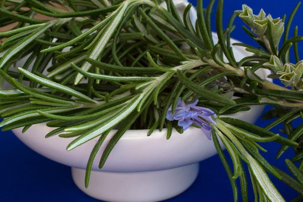 Ramos de alecrim em flores e verdinhos. Estão dispostos dentro de um pote branco de porcelana.
