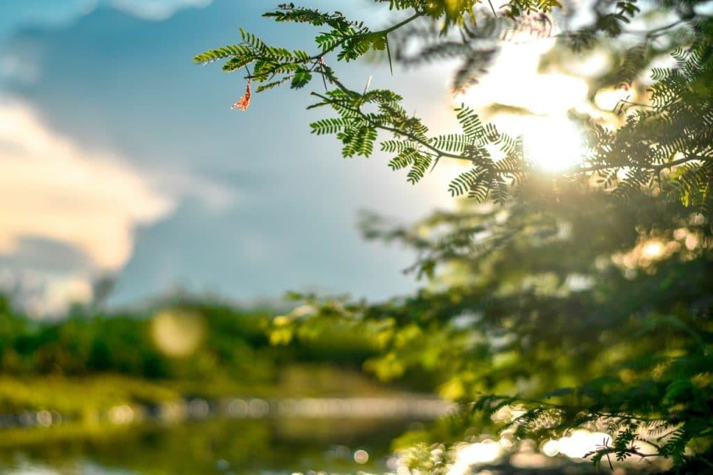 Fotografia de um raio de sol atravessando os galhos de uma árvore em um parque.
