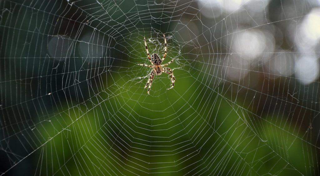 Aranha média presa em uma grande teia.