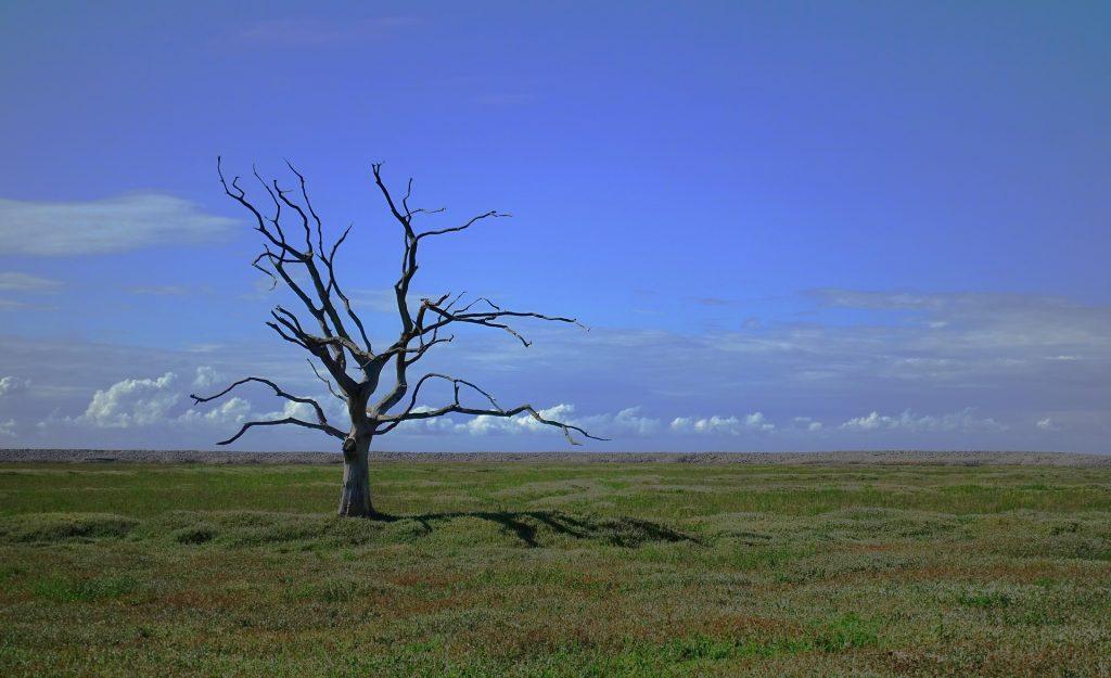 Campo gramado e céu azul. No campo, apenas uma árvore com muitos galhos, mas nenhuma folha. Nenhuma folha pode ser vista no chão também.