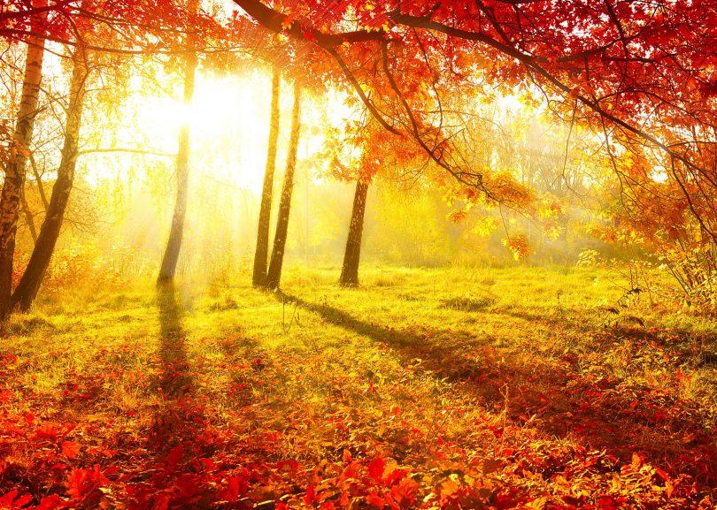 Parque natural com árvores de outono e folhas caídas pelo chão, ao pôr do sol.