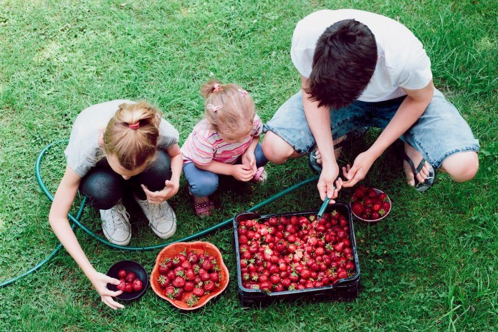 Crianças lavando morango no gramado