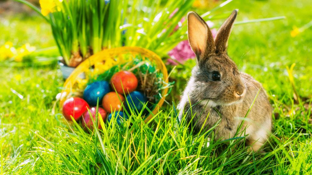 Coelhinho na grama ao lado de ovos de páscoa