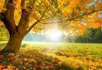 Parque em dia ensolarado com uma árvore grande com folhas caindo, o que indica o começo do outono.