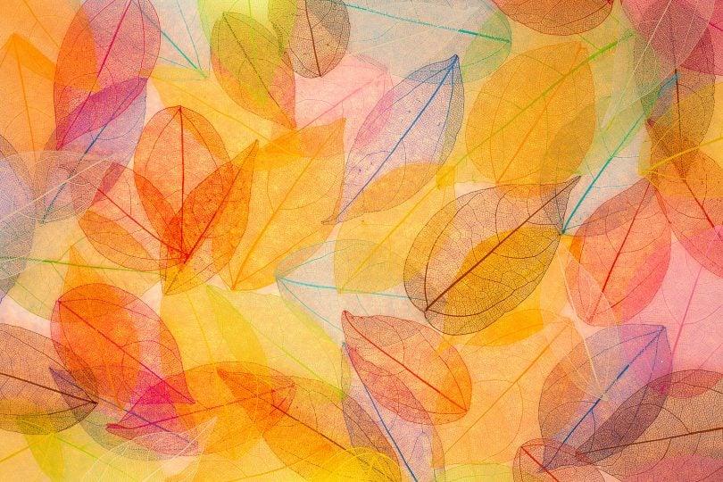 Folhas coloridas do outono e primavera