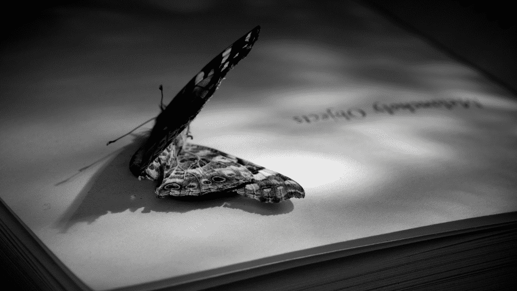 Borboleta morta sobre página de livro em branco